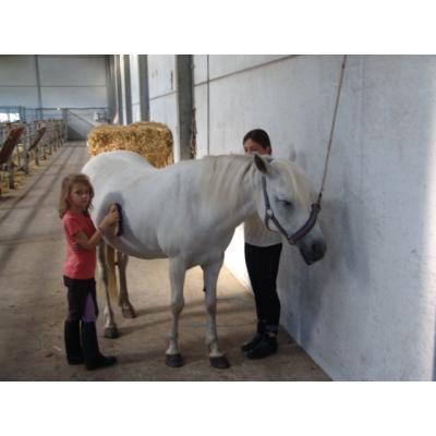 Ponykampen foto 1